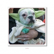 CELEBRITIES IN DISGUISE, Yoda