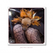 CELEBRITIES IN DISGUISE, Jean Paul Gaultier