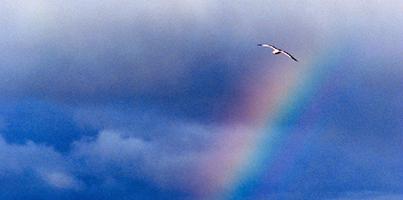 po_bird-Rainbow200pix