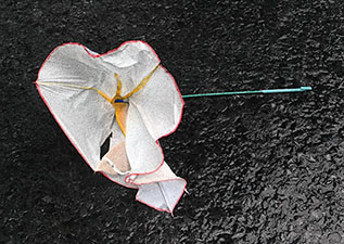 po_Creativity-Umbrella